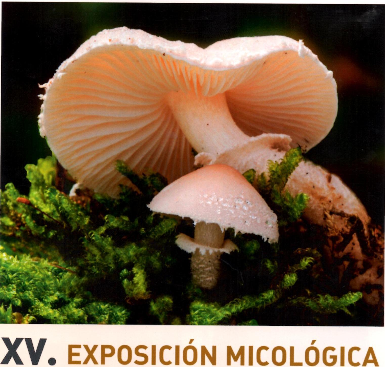 Domingo 21-oct: XV Exposición Micológica en Murgia